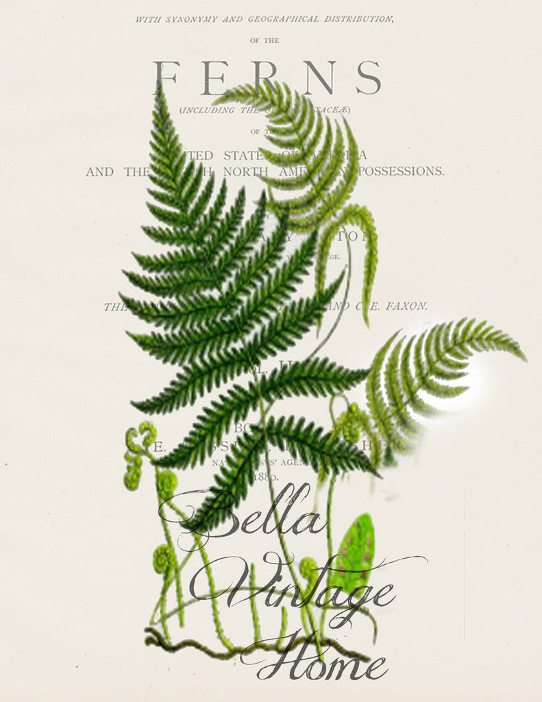Botanical Fern II  Print,  Pillow, Note Cards, Tea Towel, Digital Download - BELLAVINTAGEHOME