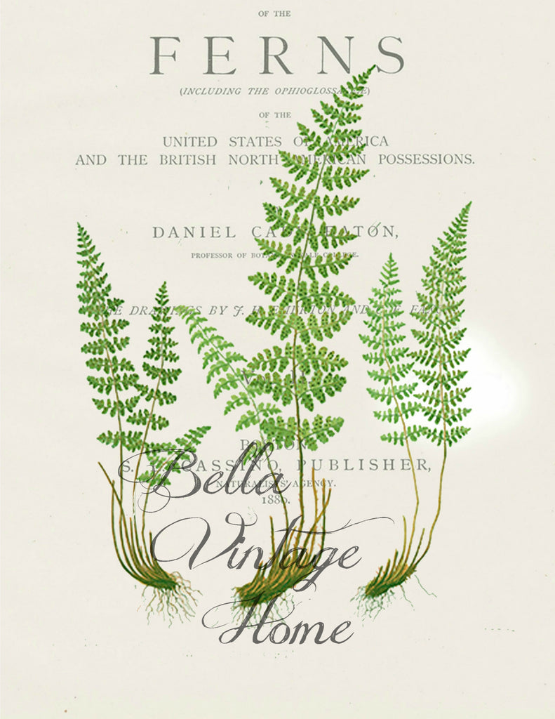 Botanical Fern III  Print,  Pillow, Note Cards