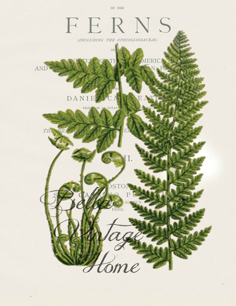 Botanical Fern IV Print,  Pillow, Note Cards