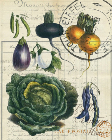 Botanical  French Veggie  Cabbage Print,  Pillow, Note Cardsl