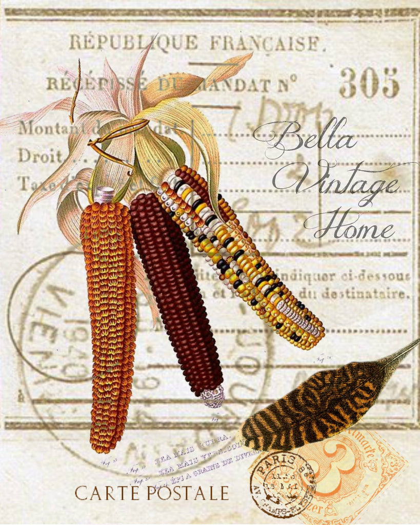 Harvest Indian Corn  Botanical Print,  Pillow, Note Cards