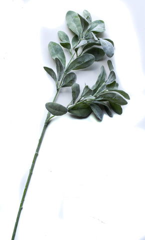 Set of 3 Lamb's Ear Stems  28 ""