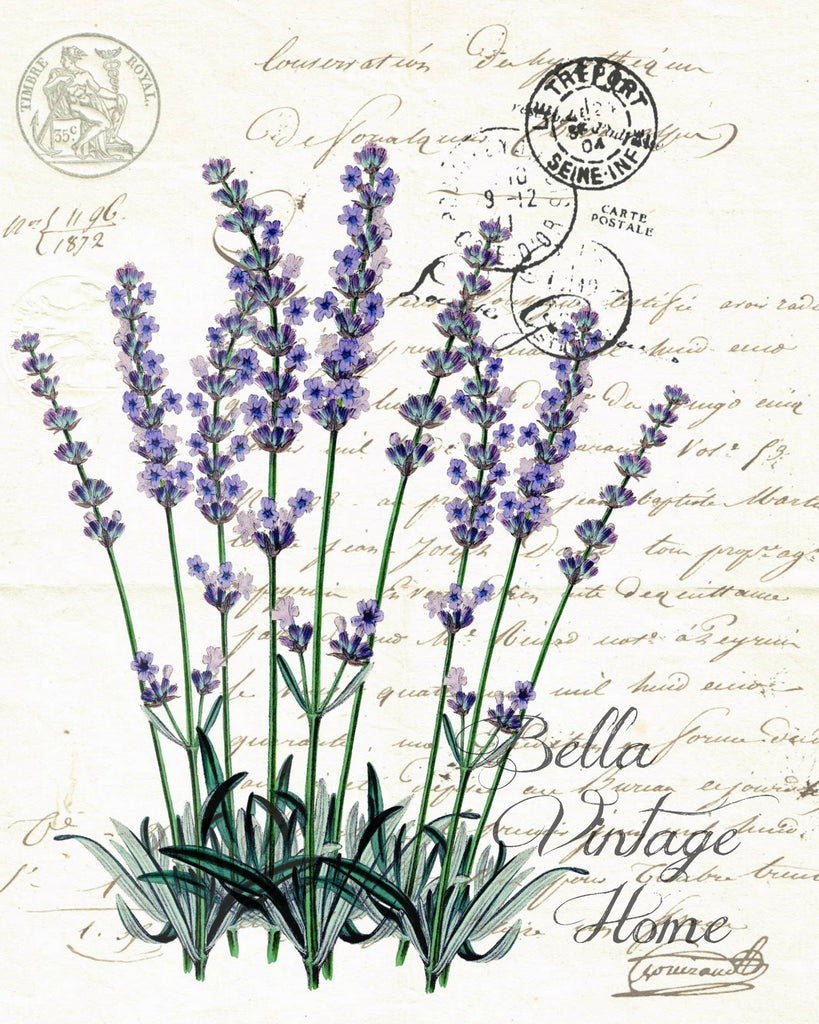 Botanical Lavender Print, Pillow, Note Cards, Tea Towel, Digital Download - BELLAVINTAGEHOME