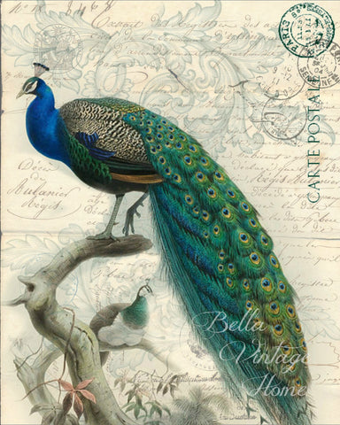 Peacock Botanical Print,  Pillow, Note Cards