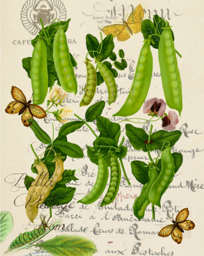 Botanical  Peas Print,  Pillow, Note Cards, Tea Towel, Digital Download - BELLAVINTAGEHOME