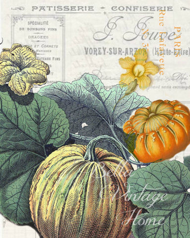 Harvest Pumpkin and Gourd Botanical Print,  Pillow, Note Cards, Tea Towel, Digital Download - BELLAVINTAGEHOME