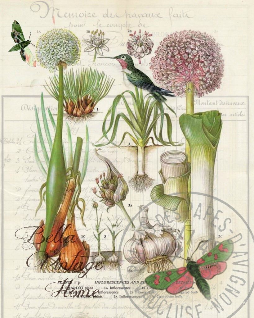 Botanical  Shallots Print,  Pillow, Note Cards, Tea Towel, Digital Download - BELLAVINTAGEHOME