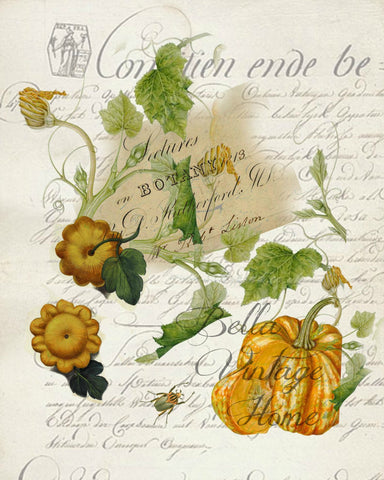 Harvest  Squash Botanical Print,  Pillow, Note Cards, Tea Towel, Digital Download - BELLAVINTAGEHOME