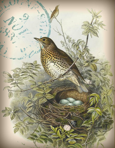 Wren with Nest  Print,  Pillow, Note Cards, Tea Towel, Digital Download - BELLAVINTAGEHOME