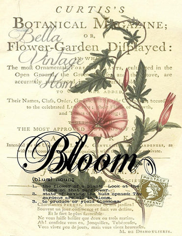 Botanical  Bloom Morning Glory Print, Pillow, Note Cards, Tea Towel