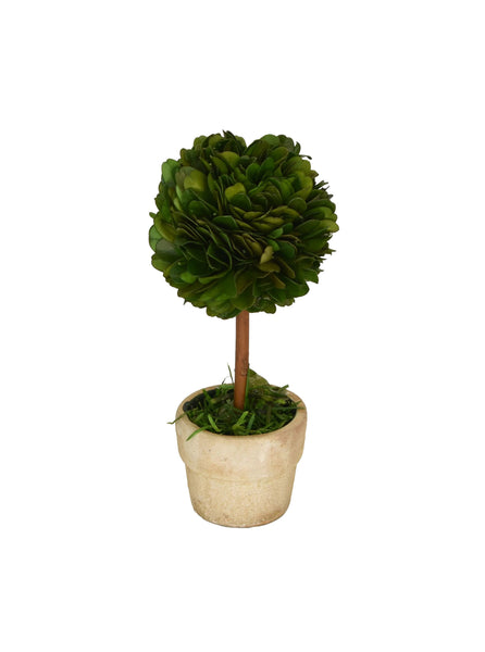 "Boxwood Topiary  6"" - BELLAVINTAGEHOME"