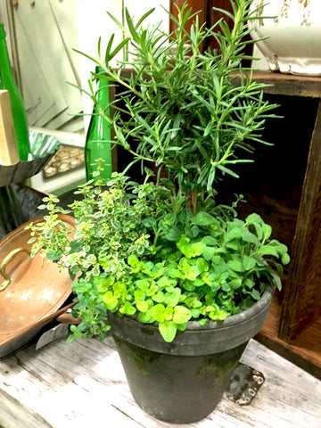 Herb Combo Pot - BELLAVINTAGEHOME