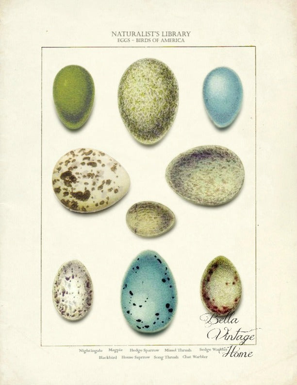 Tea  Towel Botanical Nest &  Blue Eggs - BELLAVINTAGEHOME