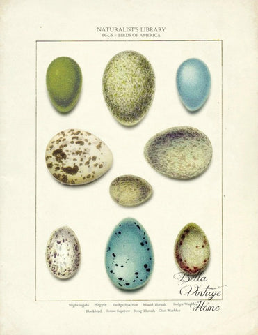 Botanical Egg Print, Pillow, Note Cards, Tea Towel