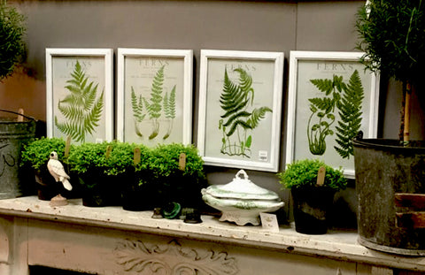 Set of 4  Botanical Fern Prints - BELLAVINTAGEHOME