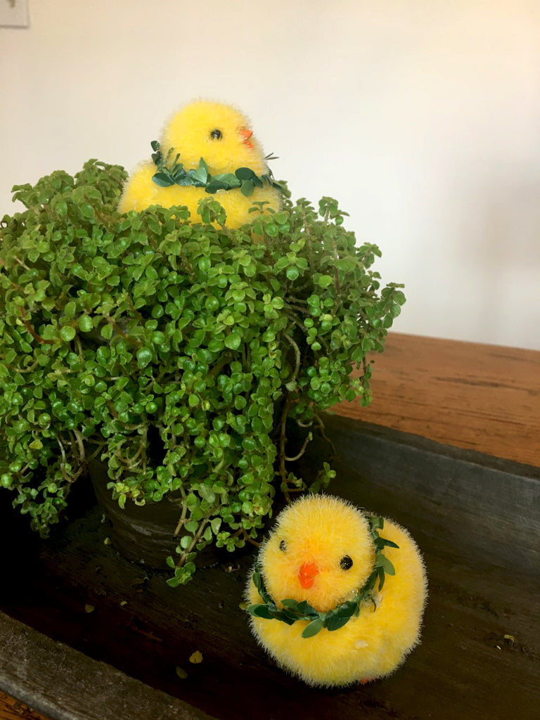 Flocked  Chicks set/2 with ivy trim - BELLAVINTAGEHOME