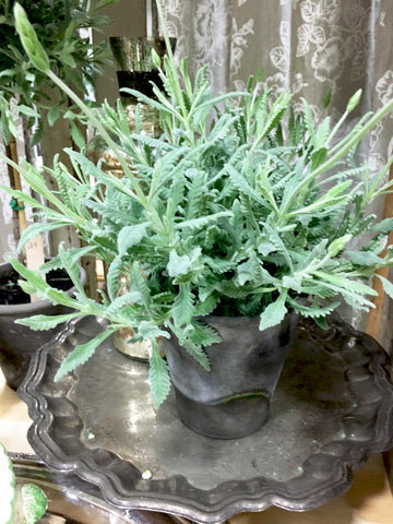 Goodwin Creek Lavender Pot - BELLAVINTAGEHOME