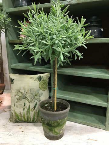 "Goodwin Creek Lavender Topiary 18"" - BELLAVINTAGEHOME"