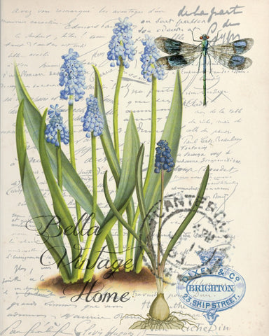 Botanical Grape Hyacinth Print, Pillow, Note Cards, Tea Towel