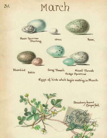 Botanical March Egg  Egg Print, Pillow, Note Cards, Tea Towel