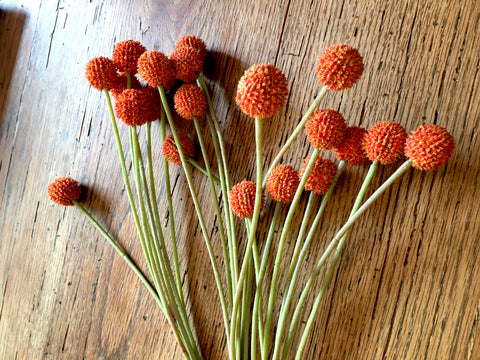Floral Orange Billy Ball Stems Set/ 3 - BELLAVINTAGEHOME