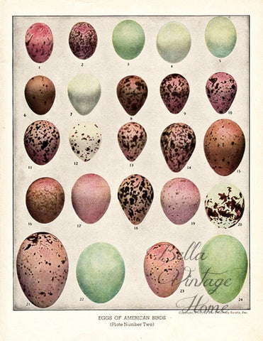 Botanical Pink Egg Print, Pillow, Note Cards, Tea Towel