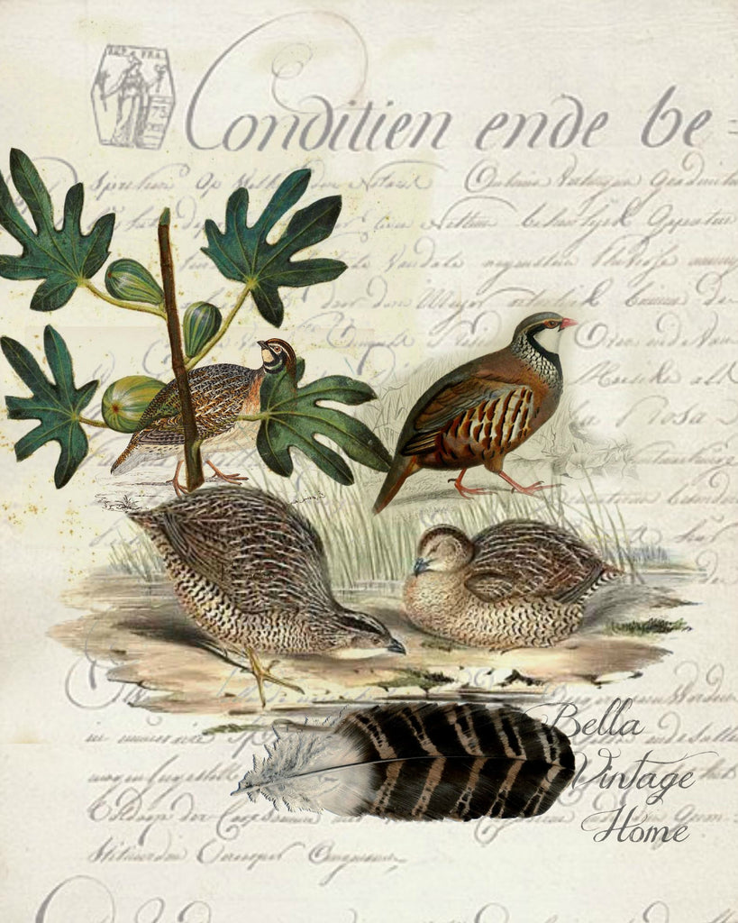 Harvest Quail Botanical Print,  Pillow, Note Cards, Tea Towel, Digital Download - BELLAVINTAGEHOME