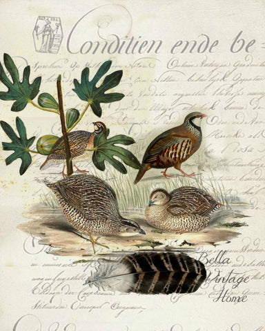 Harvest Quail Botanical Print,  Pillow, Note Cards, Tea Towel