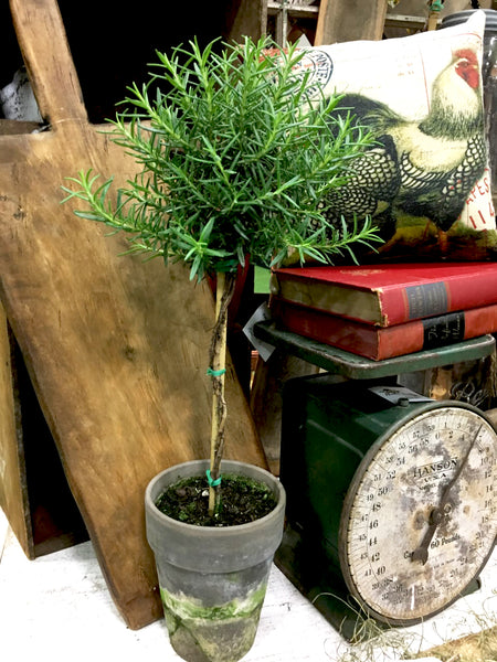 "Rosemary Topiary 18"" - BELLAVINTAGEHOME"