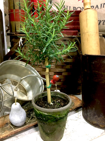 "Rosemary- Tiny Topiary 12"" - BELLAVINTAGEHOME"