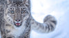 10 Reasons Your Spirit Animal Might Be a Snow Leopard