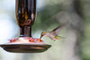 Expert-approved ways to feed your favorite birds