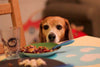 5 Thanksgiving Foods Not Safe for Dogs or Cats
