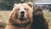 10 Reasons Your Spirit Animal Might Be A Bear