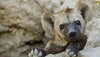 7 Ridiculously Funny Hyenas We All Can Relate To