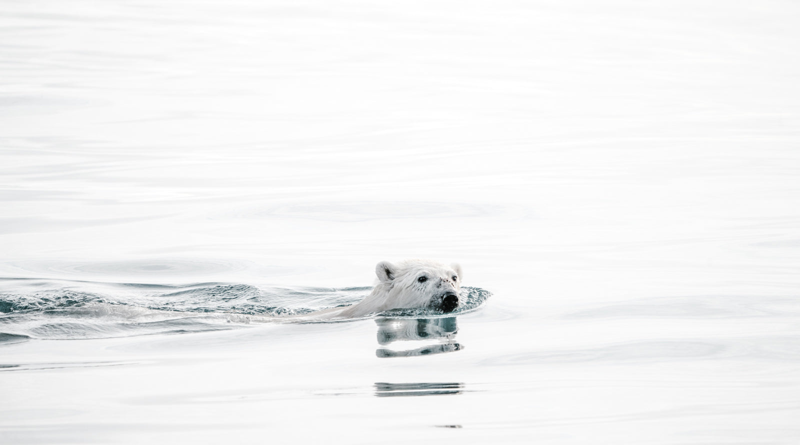10 reasons to roar about Polar Bears International