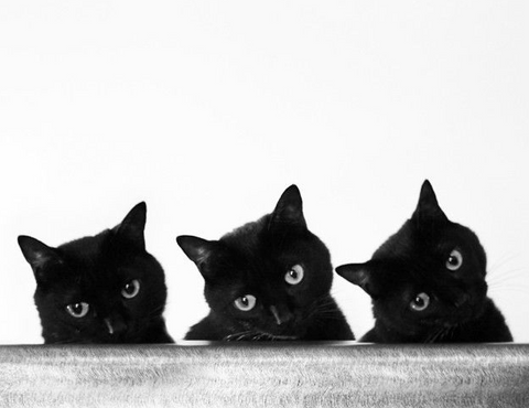 5 reasons why your spirit animal is part black cat