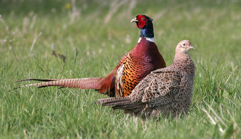Hunting Migratory Game Bird Texas General Rules