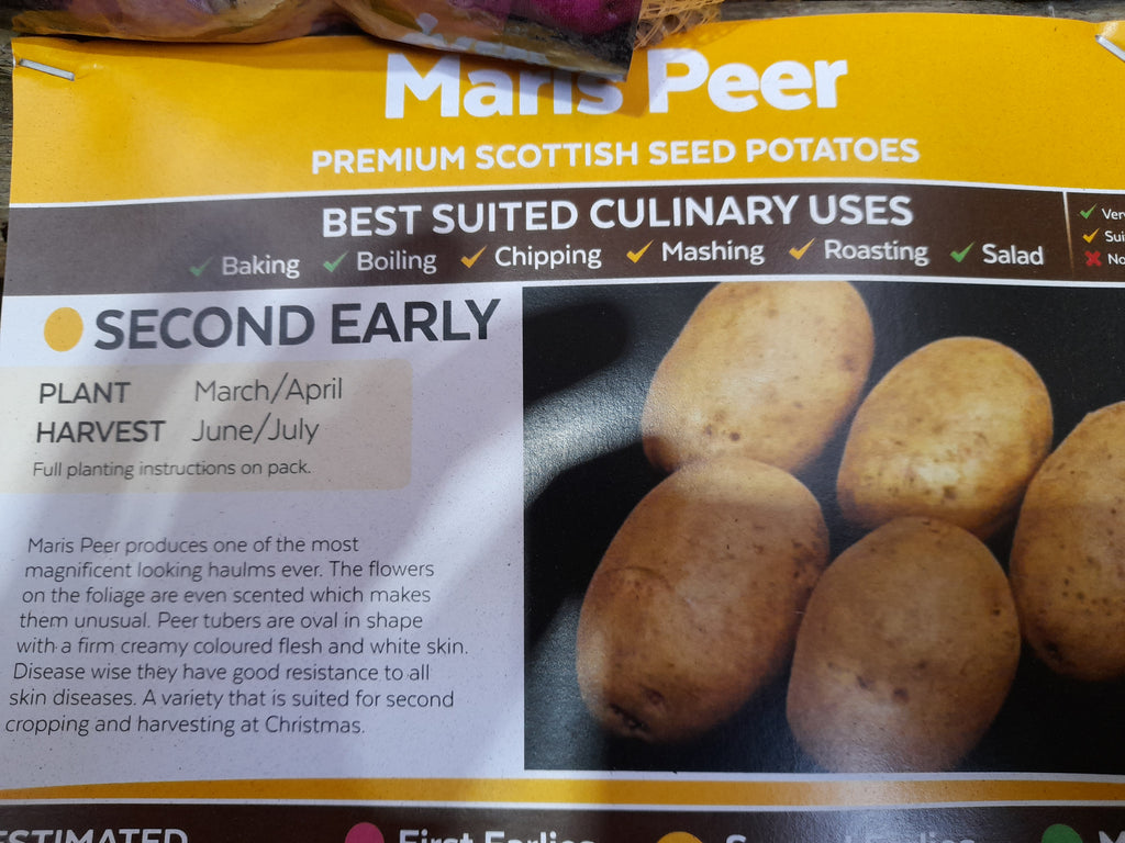 Maris Peer Seed Potatoes