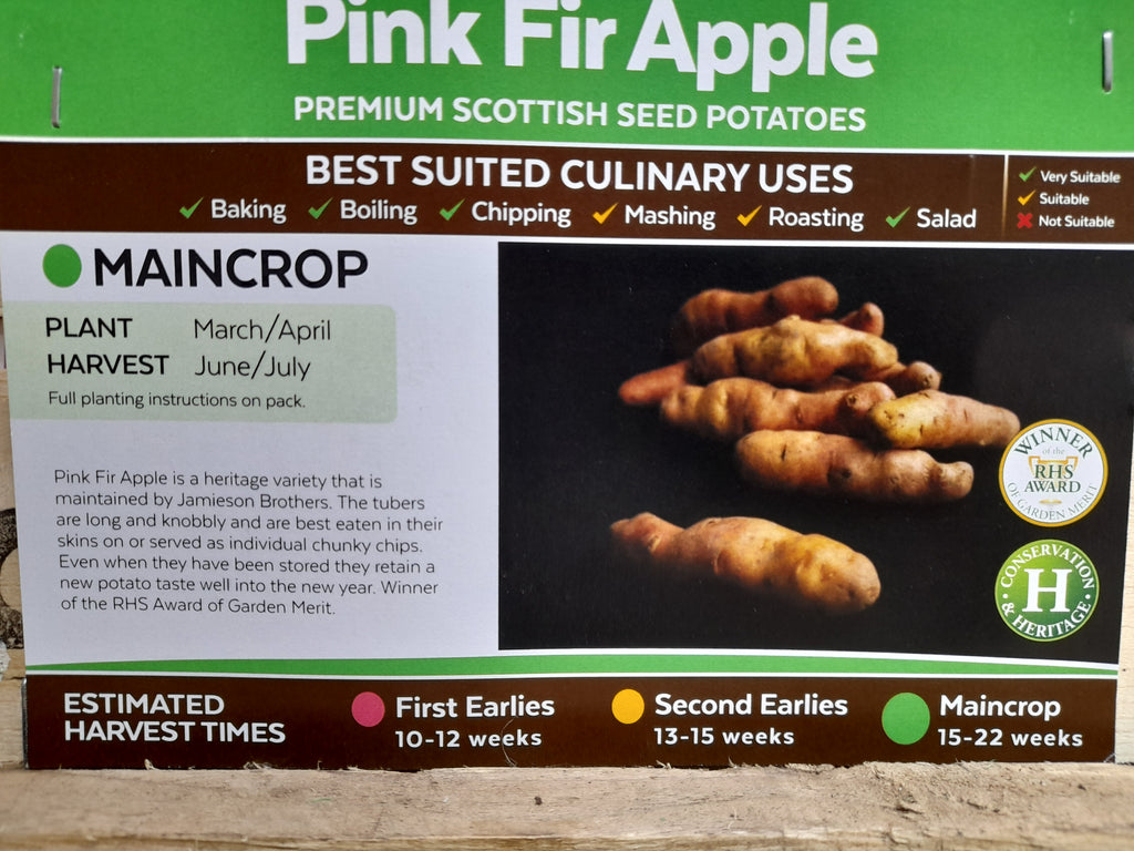 Pink Fir Seed Potatoes