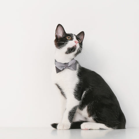 Pidan Bow Tie Cat Collar - A1