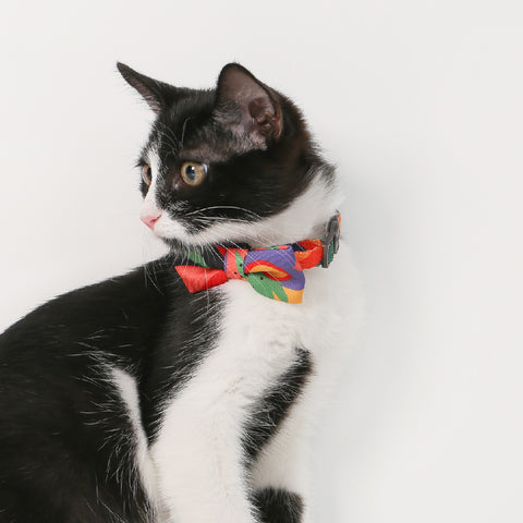 Pidan Bow Tie Cat Collar - A2