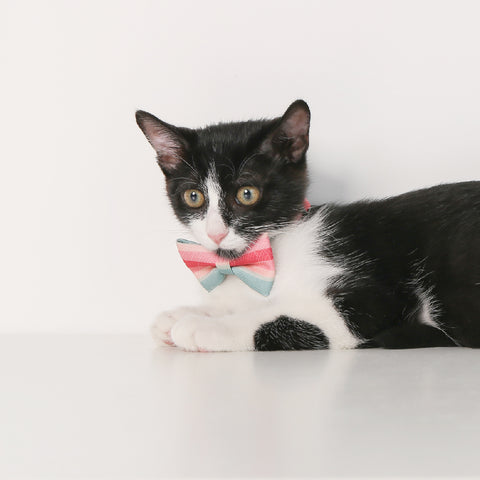 Pidan Bow Tie Cat Collar - A3
