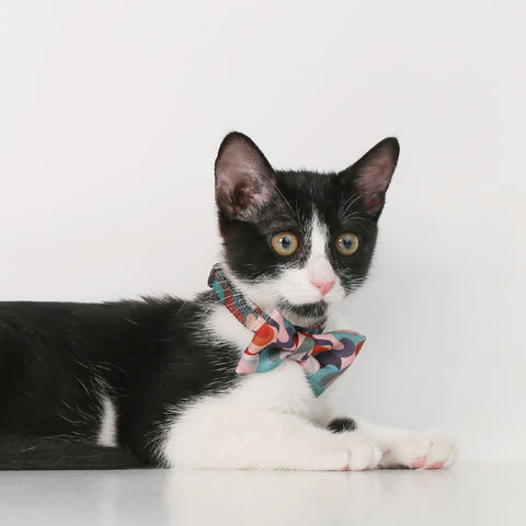 Pidan Bow Tie Cat Collar - A5