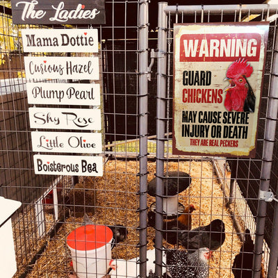 Warning Guard Chickens Metal Yard Sign