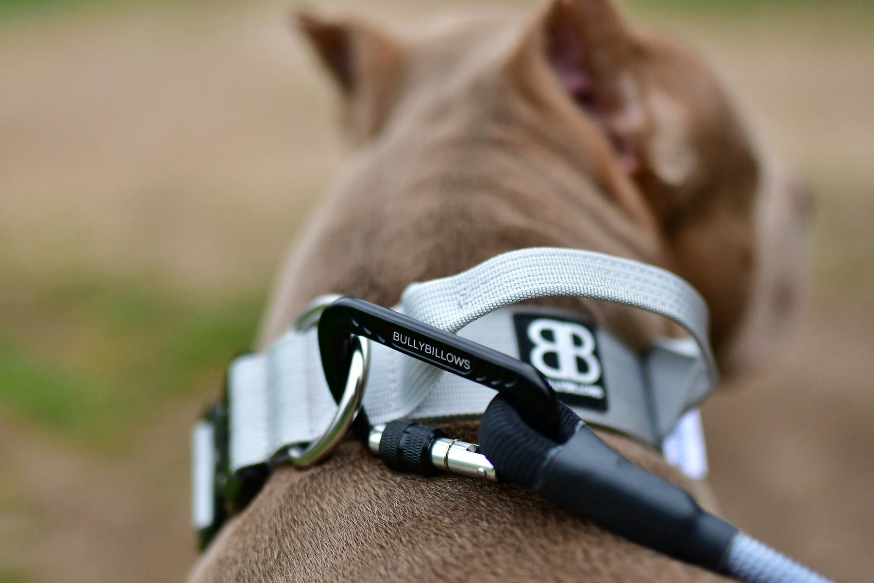Nine Common Types of Dog Collars