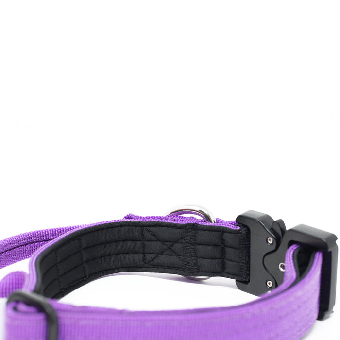 2.5cm Combat Dog Collar - Purple v2.0