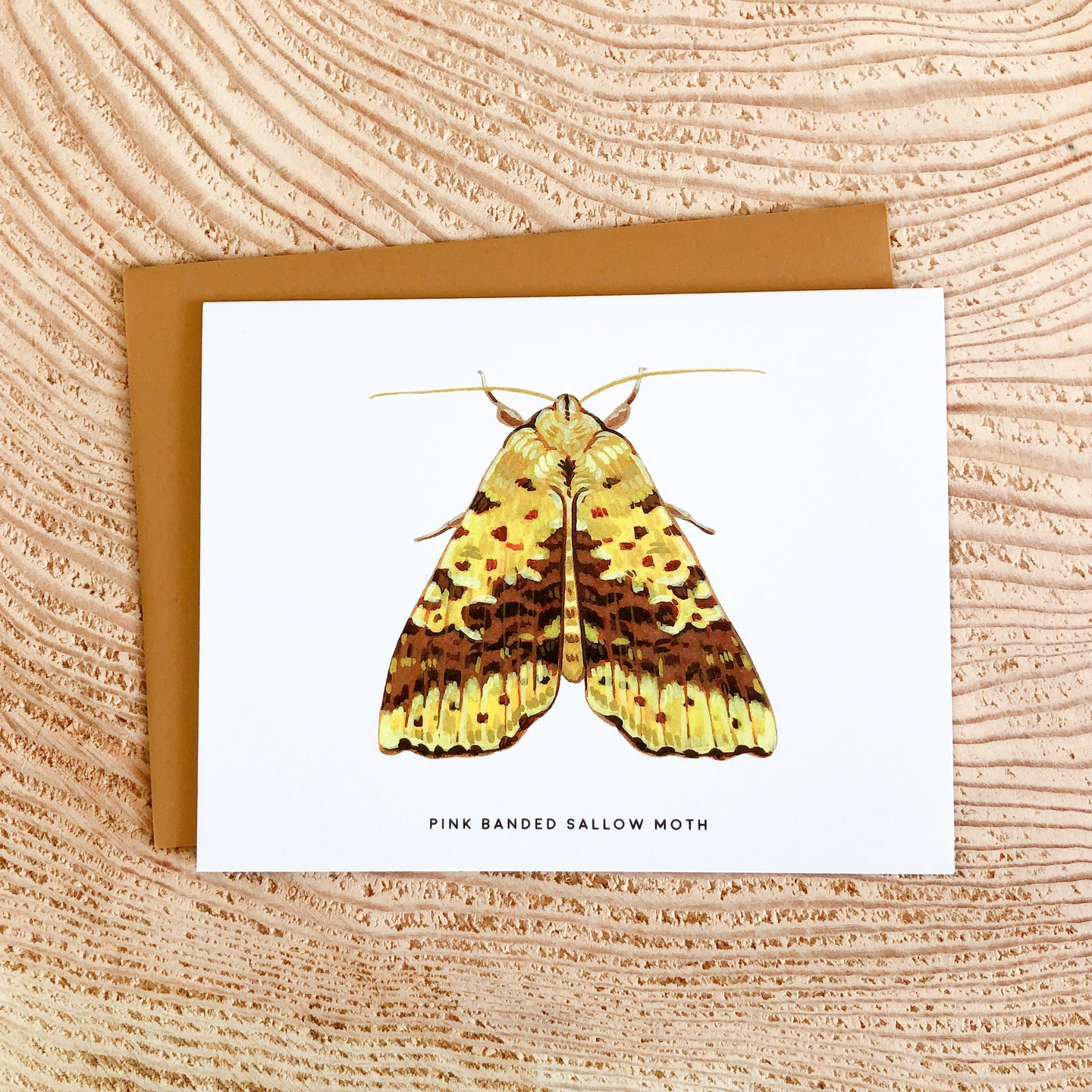Pink Banded Sallow Moth - greeting card