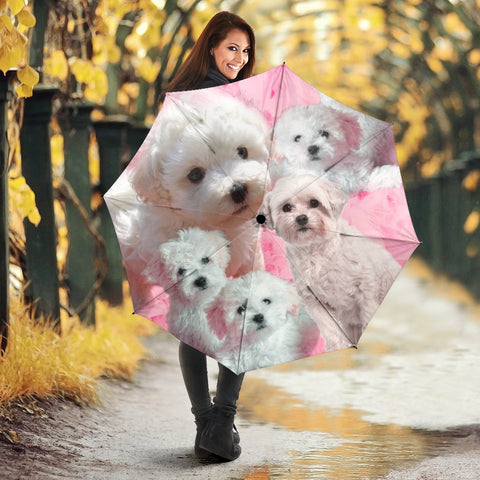 Bolognese Dog Print Umbrellas
