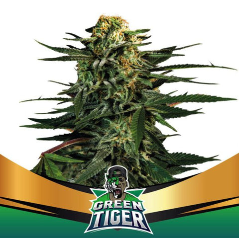Green Tiger Fast Version - BSF seeds -
